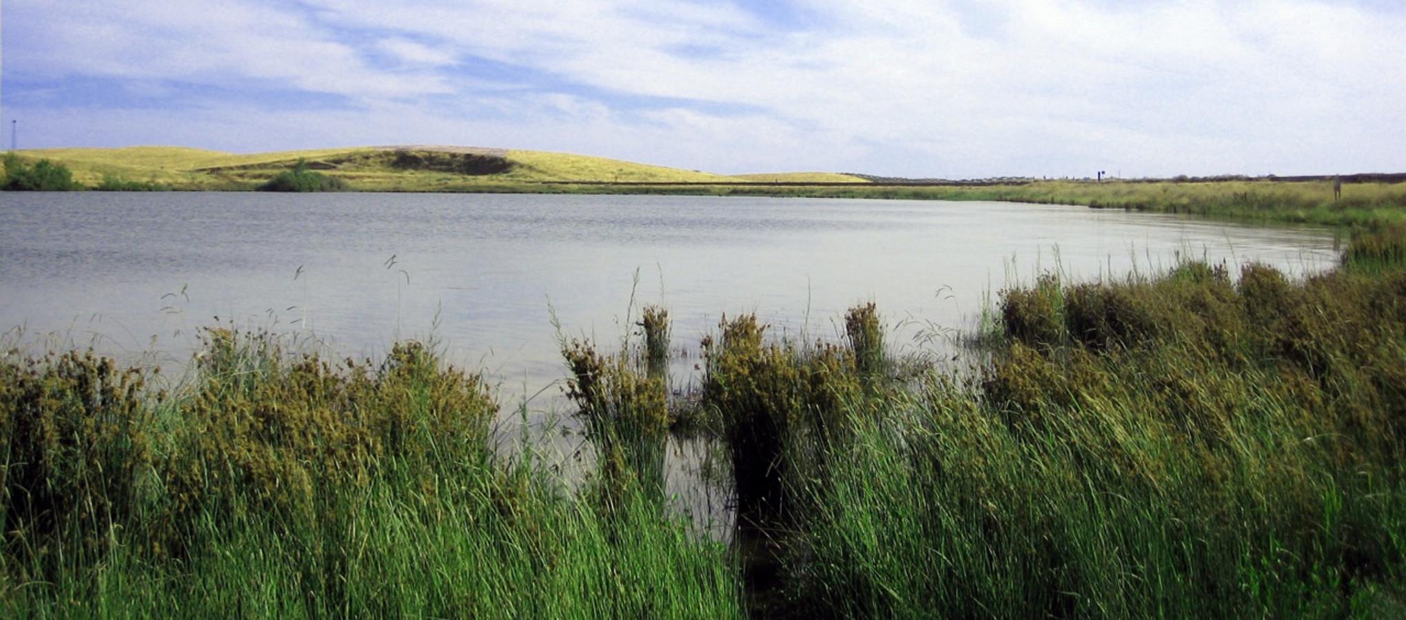 Turlock Lake Fishing Turlock Lake State Recreation