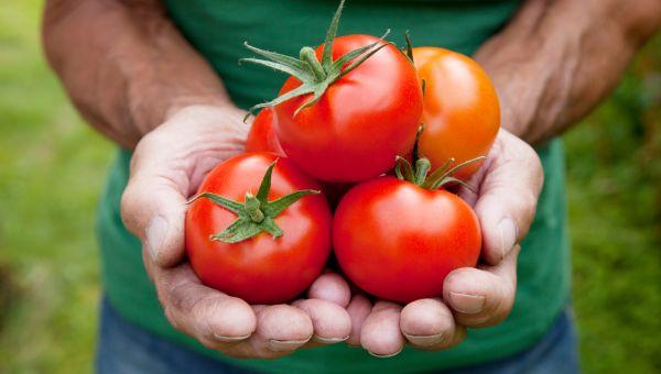 Watch 3 Ways to Grow Basil video