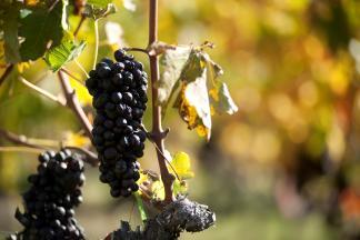 Virginia Wine Month