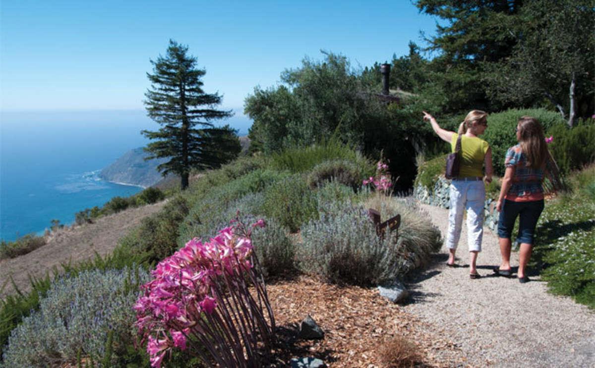 Nature Walk in Big Sur