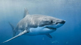 Your chances of dying from a shark attack are minimal.