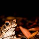 SFS: Australia - Tropical Rainforest Studies Photo