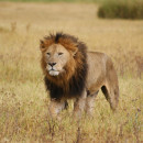 Study Abroad Reviews for The School for Field Studies / SFS: Tanzania - Wildlife Management Studies