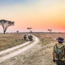 Study Abroad Reviews for Conservation Travel Africa: Zimbabwe - Nature Enthusiast Course