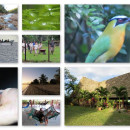 Study Abroad Reviews for Ithaca College: Belize - Reefs, Ruins, and Rainforests, faculty-led tour