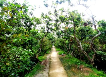 Study Abroad Reviews for World Endeavors: Volunteer in Vietnam