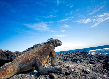 Study Abroad Reviews for Abroadia: Galápagos Islands - Marine Biology