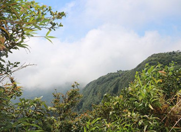 Study Abroad Reviews for CIEE: January in Monteverde