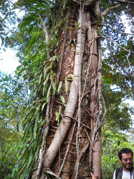 costa rica sustainable development strategy Program options include the semester sustainable development studies  program,  session ii - applied research techniques & strategies toward  sustainability costa rica is known worldwide for its conservation efforts that  have attracted.