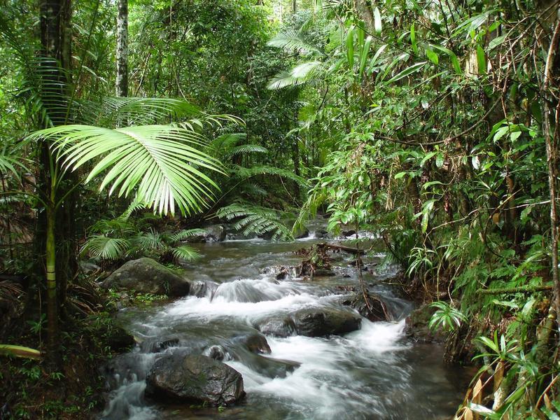 The school for field studies sfs australia new for Australian rainforest