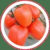 Tomate Híbrido SV2333TJ