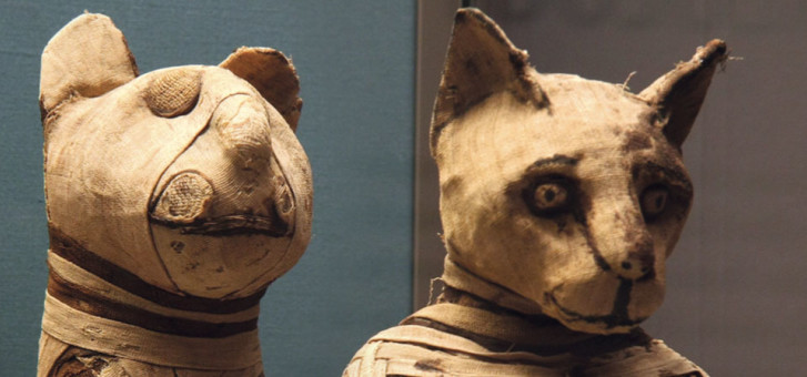 the role of cats in three ancient societies At one point, rome took over egypt and began to spread cats over the  with  three other characters, one of them being ancient greece and the.
