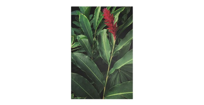 The Red Ginger Print