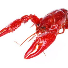 60 lbs. Live Crawfish   QUALITY Grade