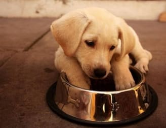 Animal Related  business for sale in Templestowe - Image 1