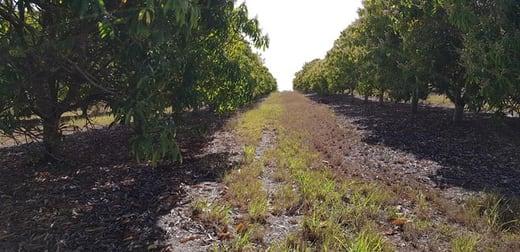 1/19 Framptons Road North Isis QLD 4660 - Image 3