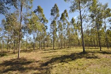 Lowmead QLD 4676 - Image 3