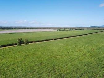 Cane Farms Innisfail QLD 4860 - Image 3