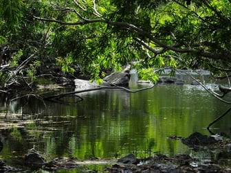 Lot 1 Mulligan Highway, Cooktown QLD 4895 - Image 1