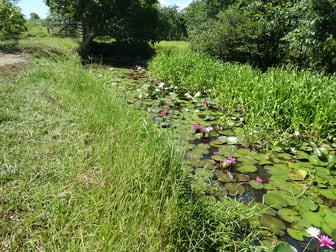 64000 Bruce Highway Innisfail QLD 4860 - Image 2