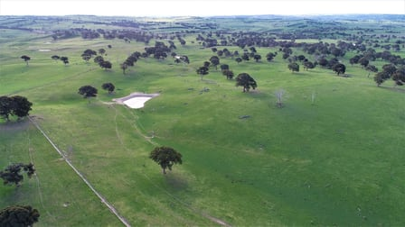 Mount Henry South/1159 Binda Road Crookwell NSW 2583 - Image 3