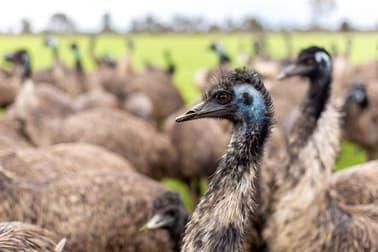 Longview Emu Farm Kerang VIC 3579 - Image 1
