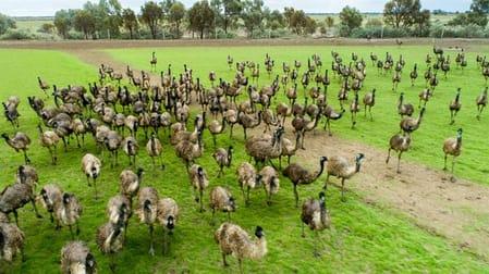 Longview Emu Farm Kerang VIC 3579 - Image 3