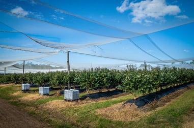 Grafton Blu Farms Grafton NSW 2460 - Image 3