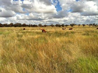 Gilgai Farms Geurie NSW 2818 - Image 1