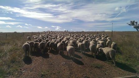 Gilgai Farms Geurie NSW 2818 - Image 2