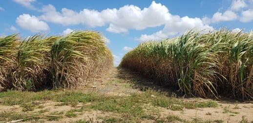 41 Schmidts Road Branyan QLD 4670 - Image 1