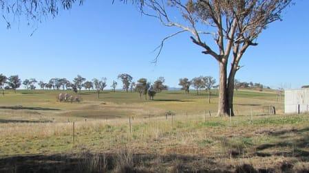 606 Peabody Road Molong NSW 2866 - Image 3