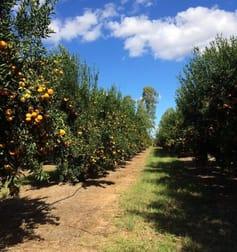 133 John Taylors Road Gayndah QLD 4625 - Image 2