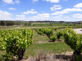 Flatview and White Hut Vineyards Horrocks Highway Stanley Flat SA 5453 - Image 3