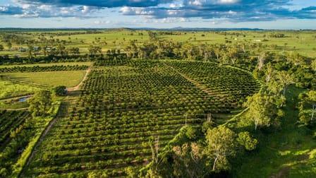 """""""Gayndah Orchard Aggregation"""" 15851 Burnett Highway Gayndah QLD 4625 - Image 3"""