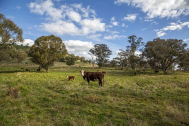 1479 Coolah Creek Road Coolah NSW 2843 - Image 2