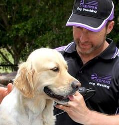 Express Business Group Australia wide  Dog Washing franchise - Image 1