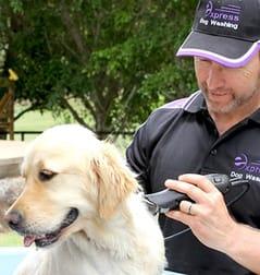 Express Business Group Australia wide  Dog Washing franchise - Image 2