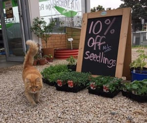 Animal Related  business for sale in Newton - Image 2