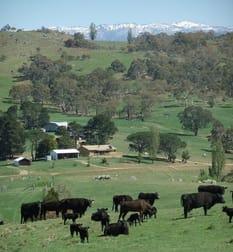 1124 Gullies Road Moonbah NSW 2627 - Image 1