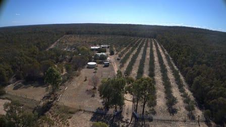 2 Rosemary Court Forest Ridge QLD 4357 - Image 2