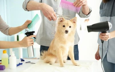 Animal Related  business for sale in Sydney - Image 1