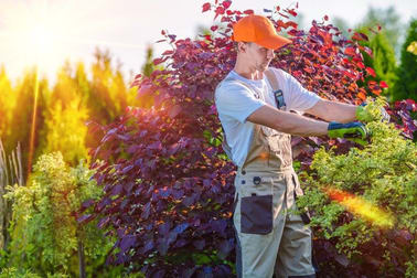 Gardening  business for sale in Indooroopilly - Image 1