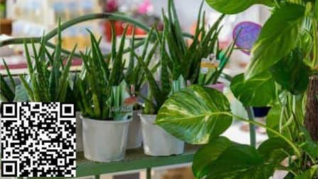 Home & Garden  business for sale in Craigieburn - Image 2