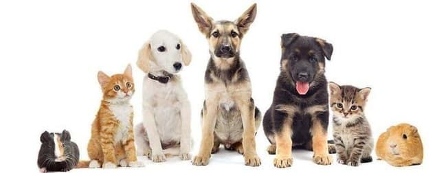 Animal Related  business for sale in Doncaster - Image 1