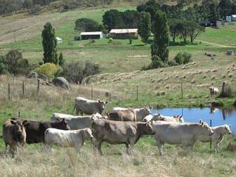 1124 Gullies Road Moonbah NSW 2627 - Image 3