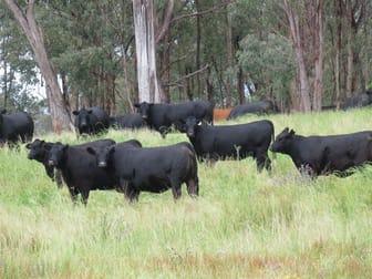 GLEN BARRA Glen Barra Road Watsons Creek NSW 2355 - Image 1