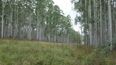 520 Capeen Ck Road Capeen Creek NSW 2469 - Image 3