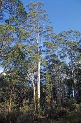 Lot 380 New Station Creek Road Wyndham NSW 2550 - Image 2