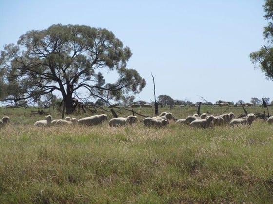 Barcaldine QLD 4725 - Image 5